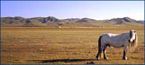 Horse on Steppe
